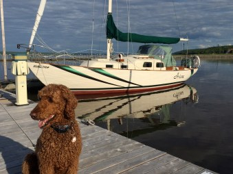 Melo enjoying guard duty... just don't consider forcing this poodle on board