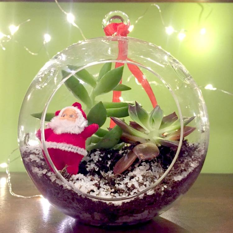 Beautiful Christmas Gift Ideas For The Home - Plants
