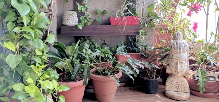 A Balcony Garden In Mumbai: Terrace Reveal