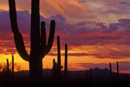 Image result for arizona sunset