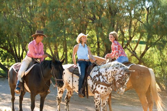 Adventures Trail Arizona Horse