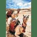 Tableau oriental-dromadaires