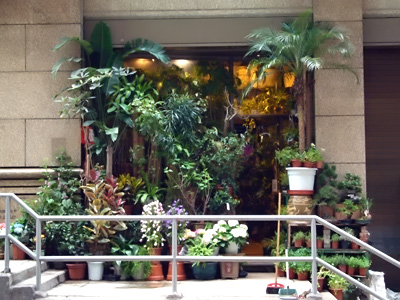 Hong Kong Plant Shop