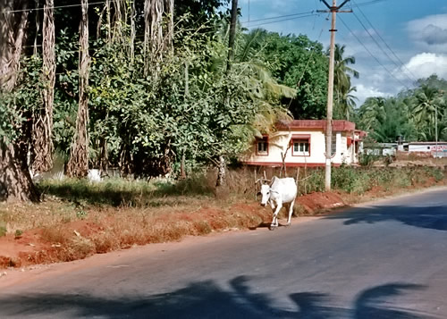 ark3 goa india 1993 calangute road