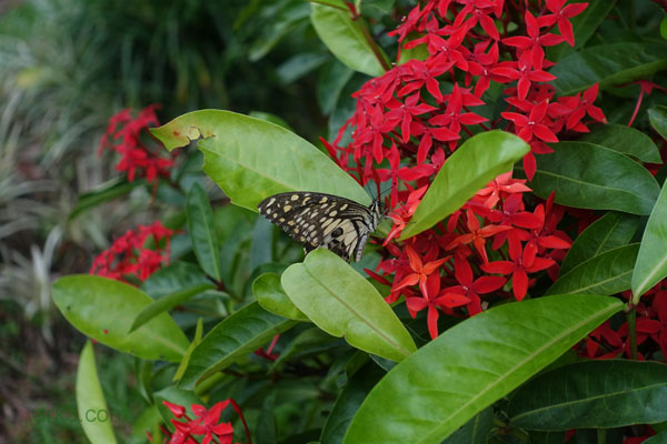 Chaeson National Park - Butterfly