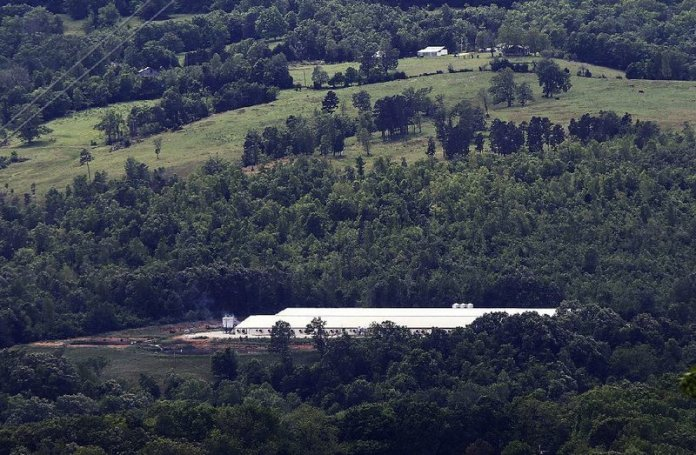 Click to copyhttps://apnews.com/9052acf910e041eaa83ff5bee6135e21 RELATED TOPICS General News Arkansas Little Rock Asa Hutchinson Pollution Arkansas commission begins process of hog farm ban on river