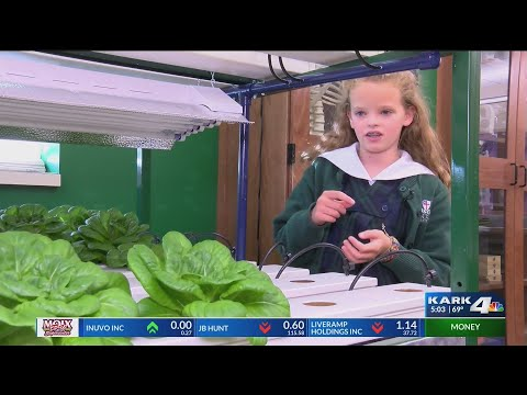 VIDEO: Hydroponic lettuce in the classroom
