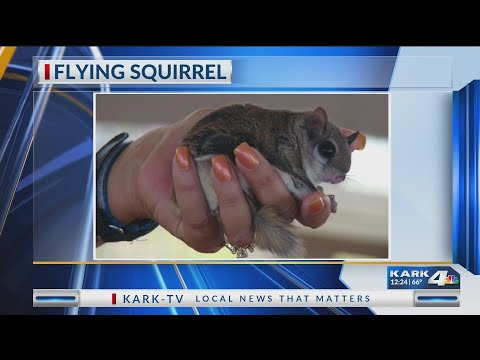 VIDEO: Watchable Wildlife: Flying Squirrel