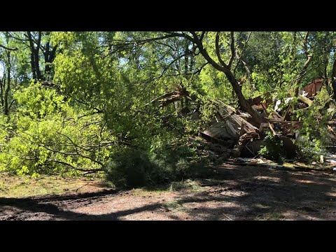 Watch: Jefferson Co. man dead after tree falls on home, authorities say