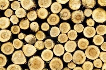 Madera de pino usos y aplicaciones arkiplus - Maderas del pino ...