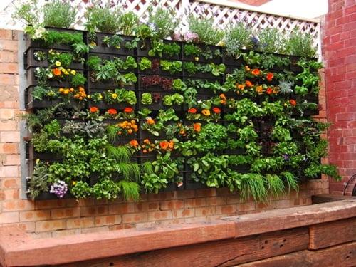 Dise o de jardines verticales for Plantas recomendadas para jardin vertical