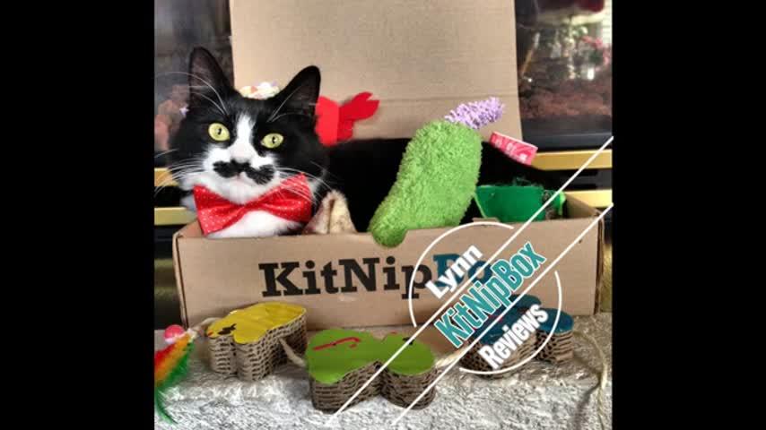 Lynn Vance Show KitNip Box Review