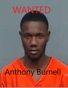 Anthony Burnell_1553794060448.png.jpg