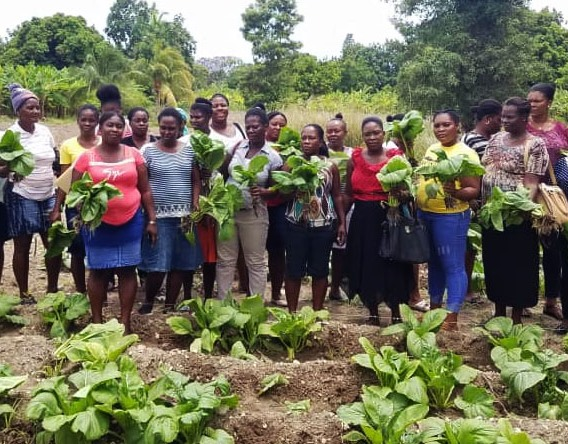 Haitian female gardeners picking Asian spinachjpg_1560797698582.jpg.jpg