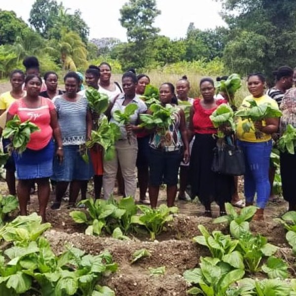 Haitian female gardeners picking Asian spinachjpg_1560797698582.jpg.jpg
