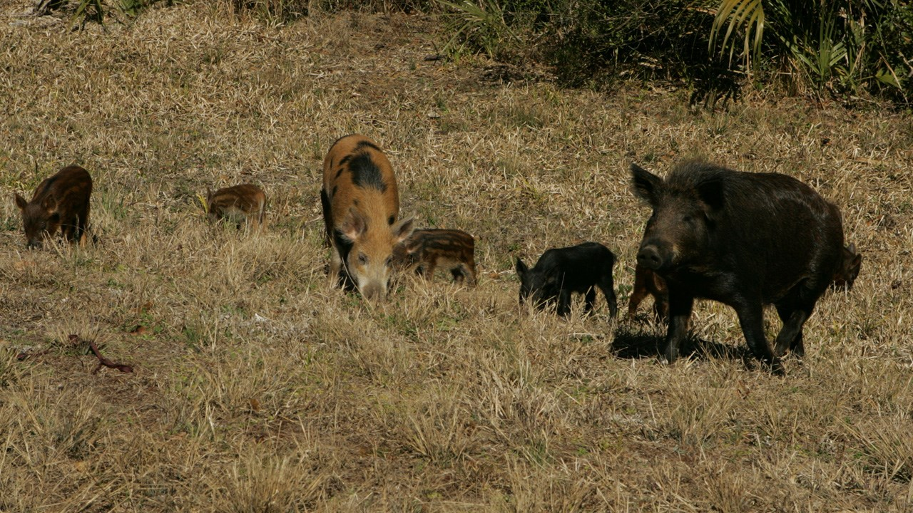 Gov  Abbott signs Hughes' bill to allow killing feral hogs without