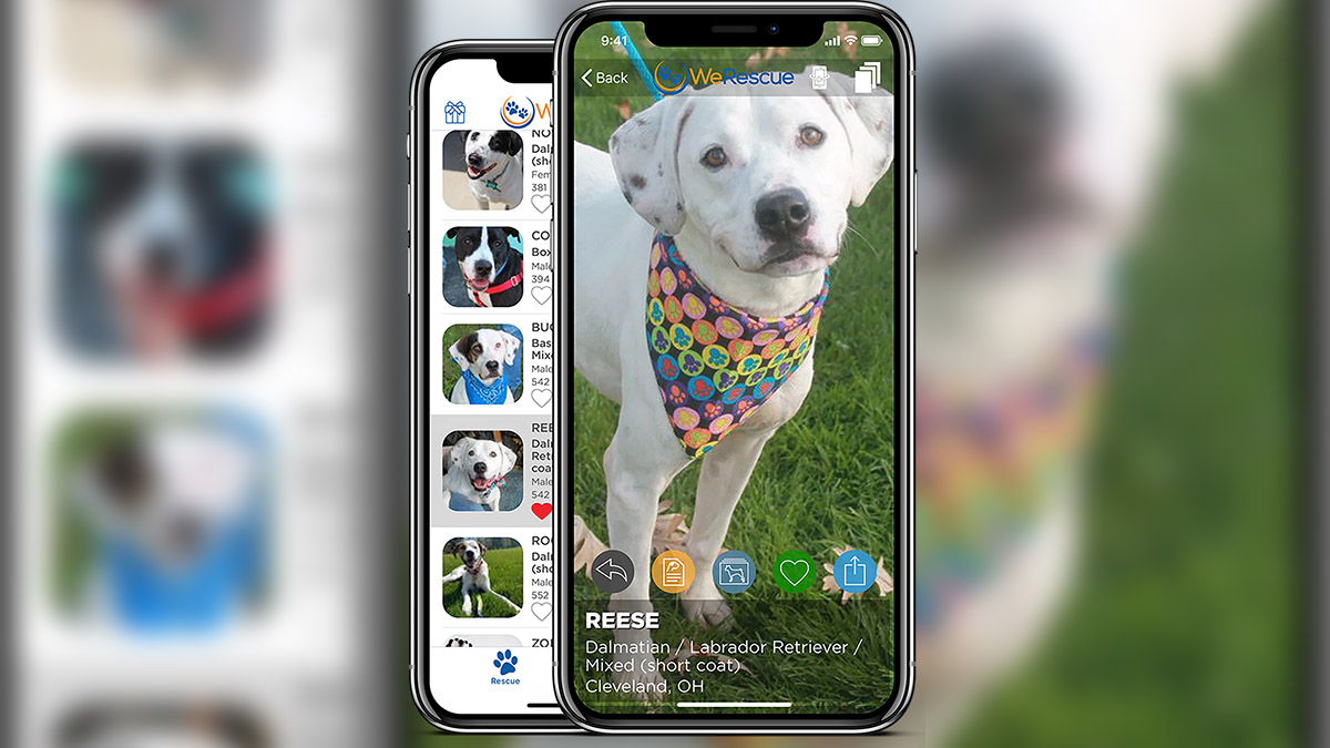 WeRescue' App Allows For Pet Adoption on Your Phone | ArkLaTexHomepage