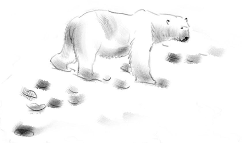 Eisbär in NYANy Alesund (c)kheymach