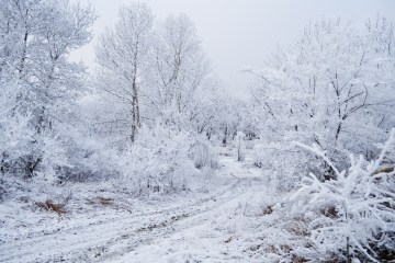 http://www.publicdomainpictures.net/view-image.php?image=17839&picture=trees-in-the-snow