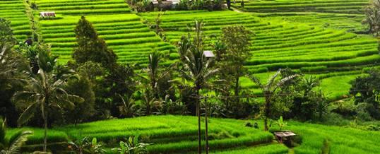 Cycling di Bali – Jatiluwih Cycling Trip