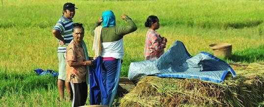 Paket Outing di Bali Farm