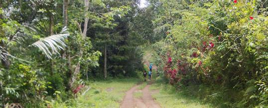 Cycling Bali Nature Adventure Forest