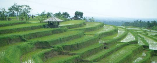 Cycling Bali Nature Adventure Rice Terrace