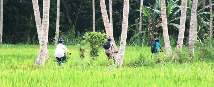 Cycling Bali Nature Adventure Rice Trip