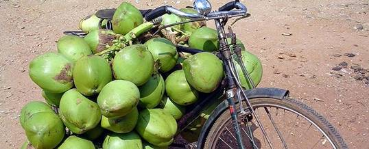 Cycling Coconut