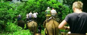 Adventure Thailand Elepant Ride