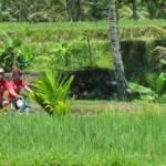 Bali Cycling - PT. Daya Mandiri