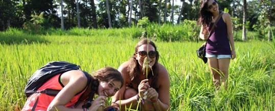 Adventure Bali Paddys Rice Terrace