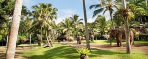 Naik Gajah Bali Adventure Tours