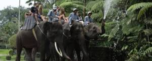 Wisata Naik Gajah Di Bali Celebrities