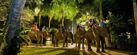 Wisata Naik Gajah Bali Adventure Tours