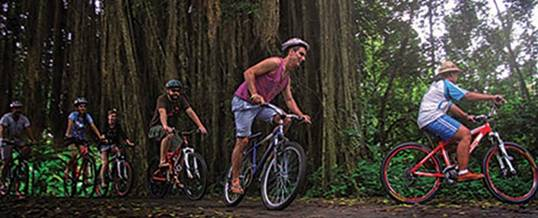 Outing Di Bali Cycling Ubud Camp Banyan Tree