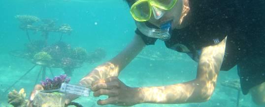 Outbound Bali Canoeing & Snorkeling Pandawa