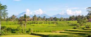 The Lokha Ubud Bali Outing Rice Paddys View