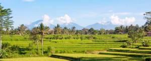 The Lokha Ubud Bali Outing Rice Paddys View