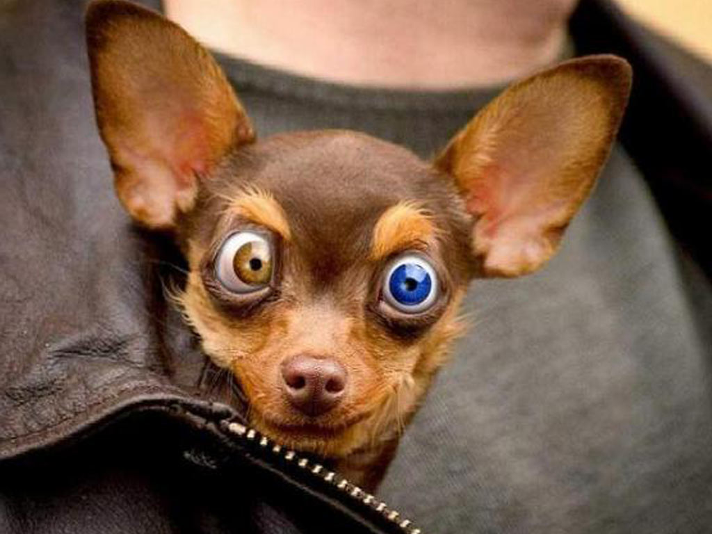 Different Types Of Small Dogspet Photos Gallery