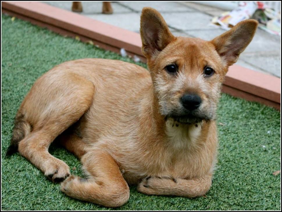 Lap Dog Rescue Hong Kongpet Photos Gallery Dog Pet