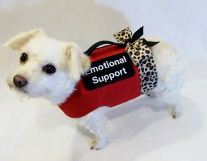 emotional support animal | dog with a red vest
