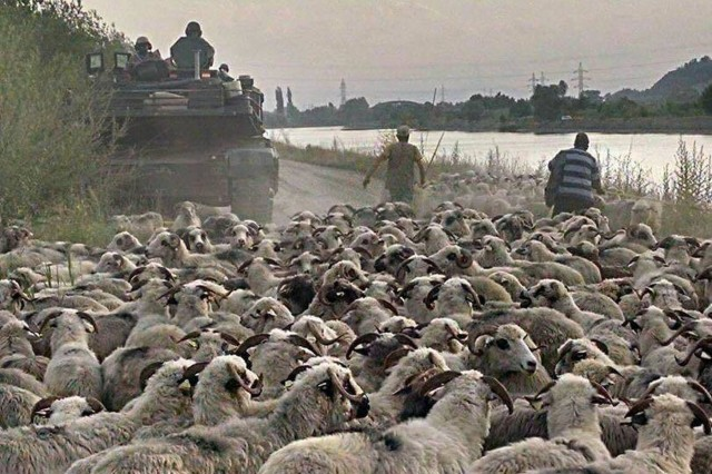 A tank crew with 1st Battalion, 66th Armor Regiment, 3rd Armored Brigade Combat Team, 4th Infantry Division, passes Romanian shepherds and a flock of sheep while departing a rail head near Voila, Romania, June 30, 2017. The crew is moving their tank to the Cincu Joint Multinational Training Center in Cincu, Romania, where the brigade will participate in the U.S. Army Europe-led multinational exercise Getica Saber 17. Getica Saber is a U.S.-led fire coordination exercise and combined-arms live fire exercise being held from July 8-15 to highlight participant deterrence capabilities, specifically the ability to mass forces at any given time anywhere in Europe. (U.S. Army photo by Sgt. 1st Class Mike Snyder, 3rd Armored Brigade Combat Team, 4th Infantry Division)