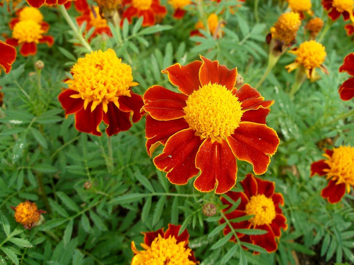 Image Result For Td Garden