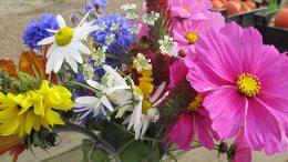 biologische bloemen-Stadslandbouwproject Mooieweg