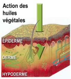 huiles-vegetales-action