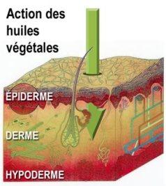 huiles-vegetales-action