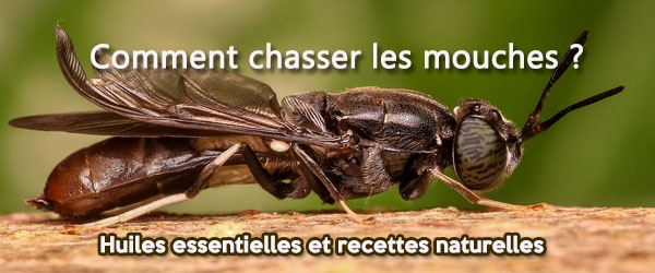chasser les mouches 600 x 250