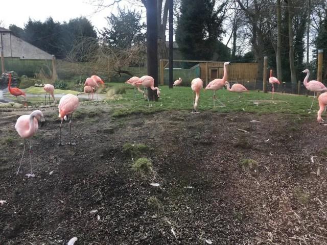 Lotherton Hall and Wildlife World - flamingo enclosure