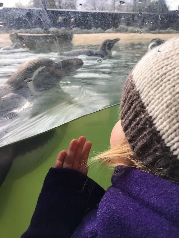 Lotherton Hall and Wildlife World - penguins underwater